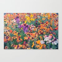 COLOUR POP // SPRING FLOWERS  Canvas Print