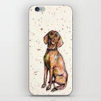Hungarian Vizsla Dog Pup… iPhone & iPod Skin