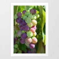 Wine on the Vine Art Print