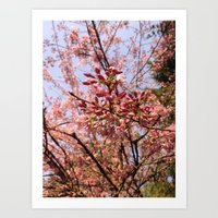 Spring Comes Suddenly Art Print