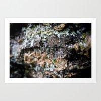 Cobwebs On Rocks After Rain Art Print