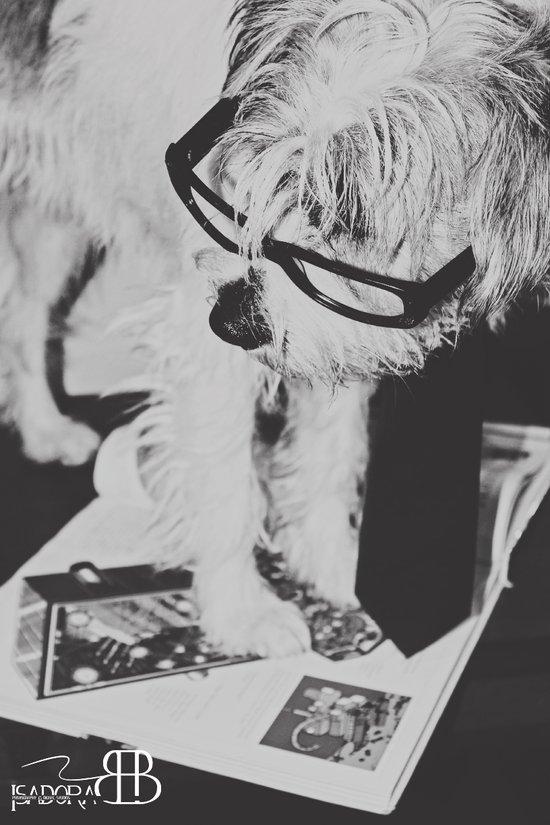 reading dog Art Print