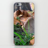 Feather in th Park iPhone & iPod Skin