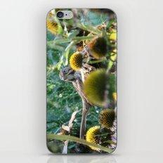 Song Sparrow iPhone & iPod Skin