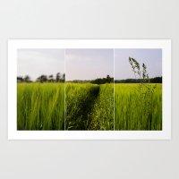 Corn 3 Art Print