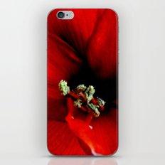 Red Amaryllis iPhone & iPod Skin