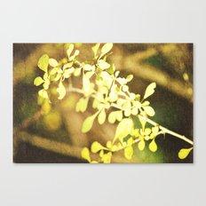 Thorns Canvas Print