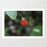 Wild Raspberry Art Print