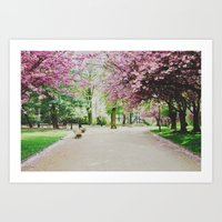 french cherry blossom Art Print