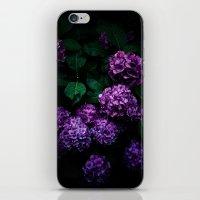 Hydrangea 01 iPhone & iPod Skin