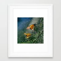 Framed Art Print featuring Monarch Moment by Shawn King