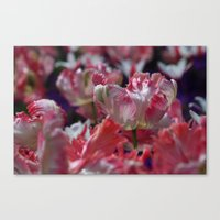 Candy Parrot Tulips Canvas Print
