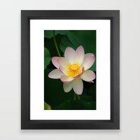 Lotus Blossom In Full Bl… Framed Art Print