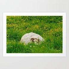 Sheep in the grass Art Print