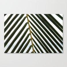 Plam Leaf Canvas Print