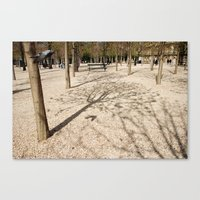 Tree & Shadow Canvas Print