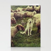 Herding dog, male, south of Israel, scaned sx-70 Polaroid Stationery Cards