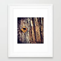 Bear Crossing Framed Art Print