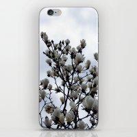 Magnolia Kobus iPhone & iPod Skin