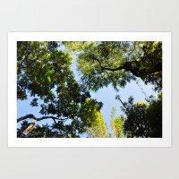 Canopy I Art Print