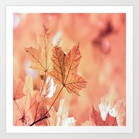 Acer Leaves In Fall Art Print