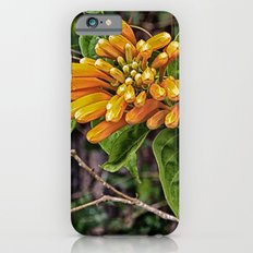 Beautiful buds of orange trumpet flower Slim Case iPhone 6s