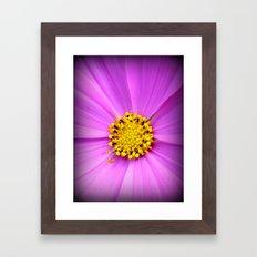 Purple flower and pollen close up. Framed Art Print