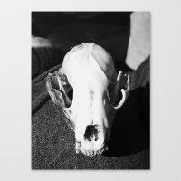 Raccoon Skull 2016 I Canvas Print