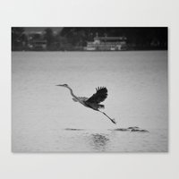 Blue Heron On Canandaigu… Canvas Print