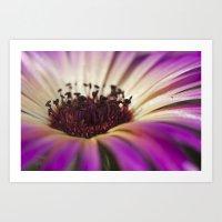 Mesembryanthemum Macro Art Print