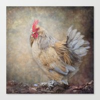 Little Rooster Canvas Print