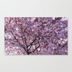 Cherry Canvas Print