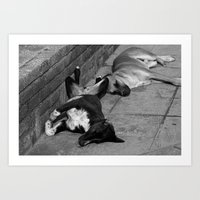 Greek Dogs Art Print