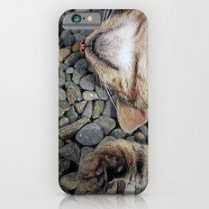 Ecstatic cat iPhone 6s Slim Case