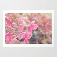 Pink Lacecap Hydrangea F… Art Print