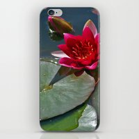 Red Waterlily iPhone & iPod Skin