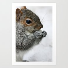 Snow Squirrel Art Print