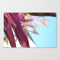 Santa Barbara Plant Canvas Print