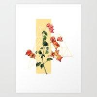 Softness Art Print