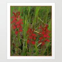Red Wild Flowers Art Print