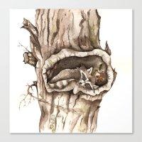 Sleeping Raccoon In Tree… Canvas Print