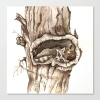 Sleeping Raccoon in Tree Hollow Canvas Print