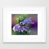 Sunlight on Purple.... Framed Art Print