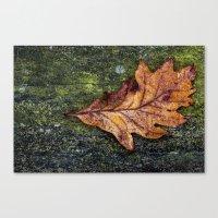 Oak Leaf Canvas Print