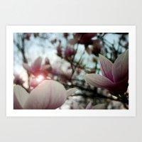 Through the Magnolia Tree Art Print