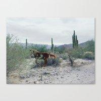 Mexican Horse Hide Canvas Print