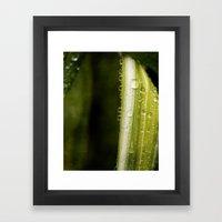 Garden Raindrops Framed Art Print