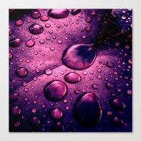 Water Drops XIIX Canvas Print