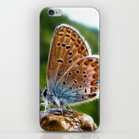 Teton Moth iPhone & iPod Skin