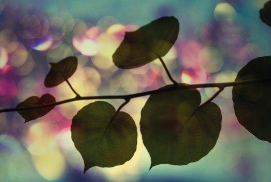 Kiwi leaves Canvas Print